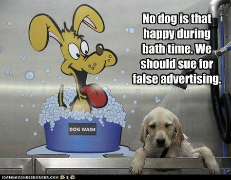 False Advertising Dog Wash False Advertising Funny Animal Quotes