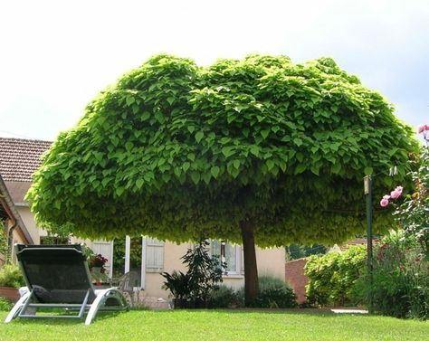 Pin Auf Baum