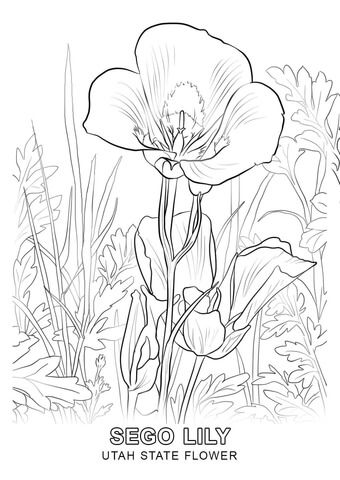 Utah State Flower Coloring Page Flower Coloring Pages