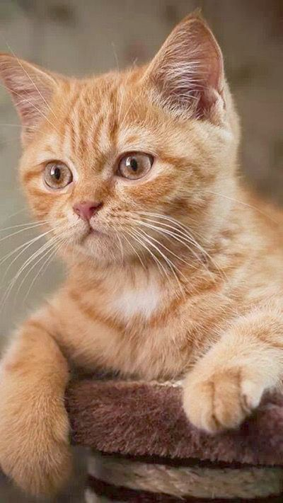 Adorable Funny Kitten Videos Yet Cute Pictures Of Animals Easy To Draw Amid Cute Animals Chewing Gif Any Cute Baby Animal Kittens Cutest Kittens Beautiful Cats