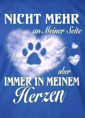 Fur Immer Katzenspruche Trauer Um Hund Hund Zitat