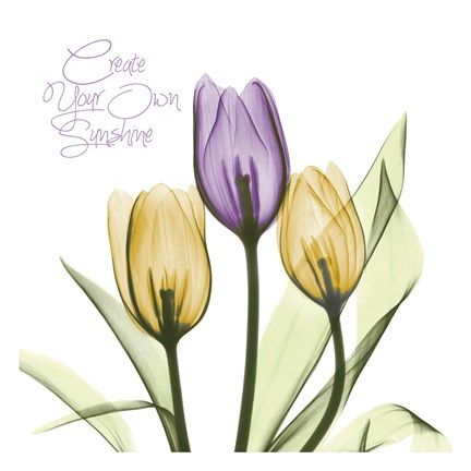 Purple Sunshine Tulips By Albert Koetsier Tulips Art Posters Art Prints Canvas Art Wall Decor