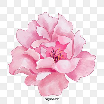 Pink Flowers Watercolor Flowers Pink Png Transparent Clipart Image And Psd File For Free Download Flower Png Images Pink Watercolor Flower Pink Painting