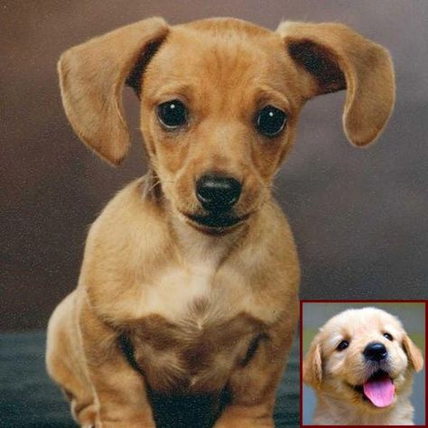 House Training A Puppy Uk And Dog Behavior Before Labor