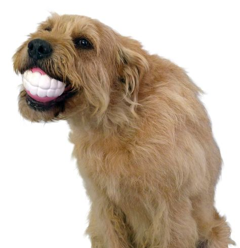 Funny Dog Toy Ball With Teeth Funny Dog Toys Pet Dogs Puppies