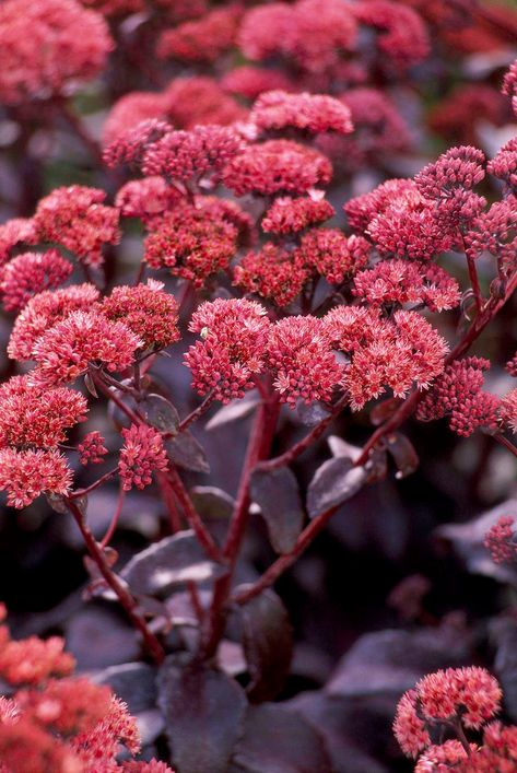8 Fall Blooming Native Plants We Love Planting Flowers Autumn