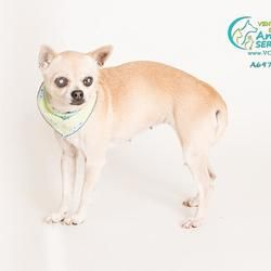 Pet Card Help Save The Dogs Please 2nd Pg Animal Shelter