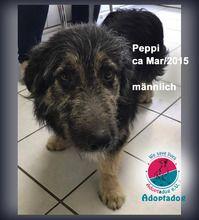 Peppi Hund Mischlingshund In Kroatien Tierheim Tiere Such Und Find