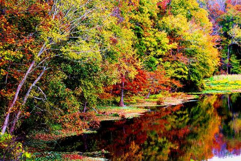 Mississippi: River Bend - State-by-State Guide to the Best Fall Color - Southernliving. At milepost 122.6 along the Natchez Trace Parkway, stop at River Bend for a view of fall foliage reflecting on the water.  For more information: River Bend