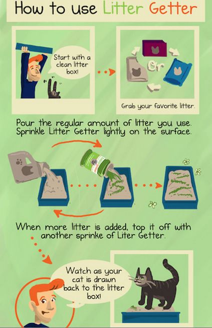 3 easy steps to litter box train a kitty attract cats and assist older cats to litter box. All-natural | Animals | Pinterest | Boxing training ...  sc 1 st  Pinterest & 3 easy steps to litter box train a kitty attract cats and assist ... Aboutintivar.Com