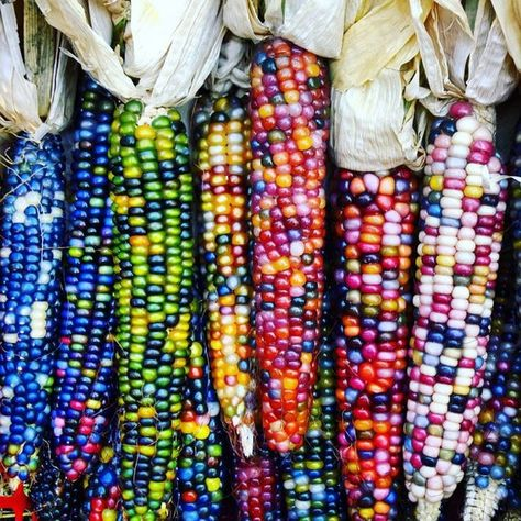 Colorful Vegetables, Fruits And Veggies, Rainbow Corn, Rainbow Salad, Glass Gem Corn, Corn Grain, Le Chef, Jolie Photo, Plantation