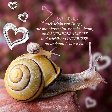 Zwei der schönsten Dinge, die man kostenlos schenken kann, sind AUFMERKSAMKEIT und wirkliches INTERESSE an anderen Lebewesen.