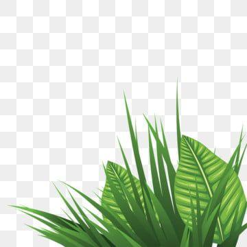 بابوا نيو غينيا العشب طبيعة بي إن جي بابوا نيو غينيا العشب Png وملف Psd للتحميل مجانا Watercolor Leaves Plant Vector Grass Clipart