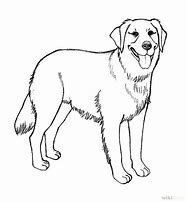 Image Result For Real Dog Coloring Pages Dog Coloring Page