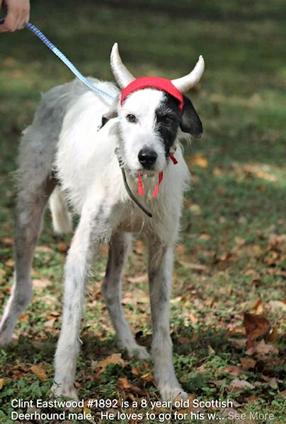 Adopt Clint On Petfinder Big Dogs Rescue Dogs Dog Adoption