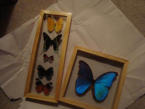 From my local Mall Earthbound Trading Company Store.  Blue Butterfly $24.95, Assorted Butterfly's $29.95.