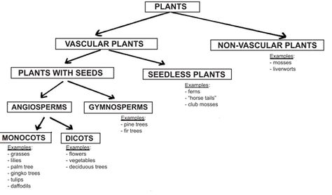 Monocot Short For Monocotyledon A Monocot Is A Group Of Flowering