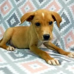 Available Pets At Wright Way Rescue In Morton Grove Illinois Esperanza