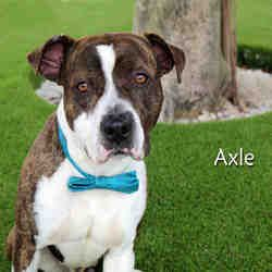 Available Pets At Lee County Domestic Animal Services In Fort