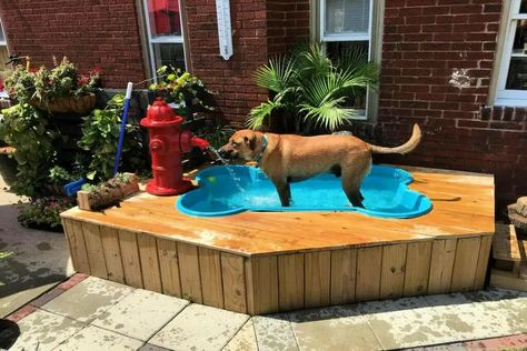 13 Dog Swimming Pool Ideas to Beat the Heat of Summer is part of Dog pool - If you decide to clip your dog, bear in mind that shearing the hair too close can depart from your dog vulnerable to sunburn Bone Shaped Dog Pool, Dog Bone Pool, Doggie Pool, Pool For Dogs, Dog Friendly Backyard, Dog Backyard, Backyard Ideas, Backyard Designs, Animal Room