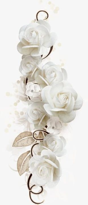 White Roses Png Images White Roses Clipart Free Download Creations Rose