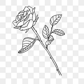 Plant Leaf Rose Flower Line Rose Clipart Black And White Flower Clipart Black And White One Flower Black And White Lines Png Transparent Clipart Image And Ps In 2021 Flower Clipart