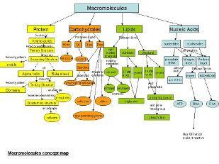 Unit Four: Macromolecules - The Molecules of Life   Teaching stuff ...