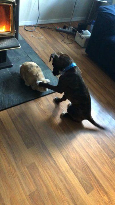 Good boy pets bunny friend | VIDEO,  Good boy pets bunny friend,  #Funny #funnygifs #gifs #topgifs #Wtf #wtfgifs