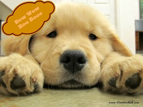Bow Wow Boo Boo Balm Our Dogs Are Not Just Pets They Are Part Of