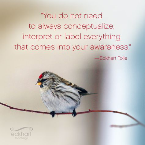 """You do not need to always conceptualize, interpret or label everything that comes into your awareness."" - Eckhart Tolle Visit the page below to receive free Present Moment Reminders in your email"