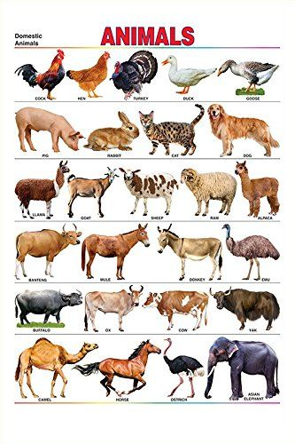 100yellow Colourful Multicolour Paper 12x18 Inch Domestic Animal S Name Chart Educational Poster Animal Book Animals Name In English Animals Wild
