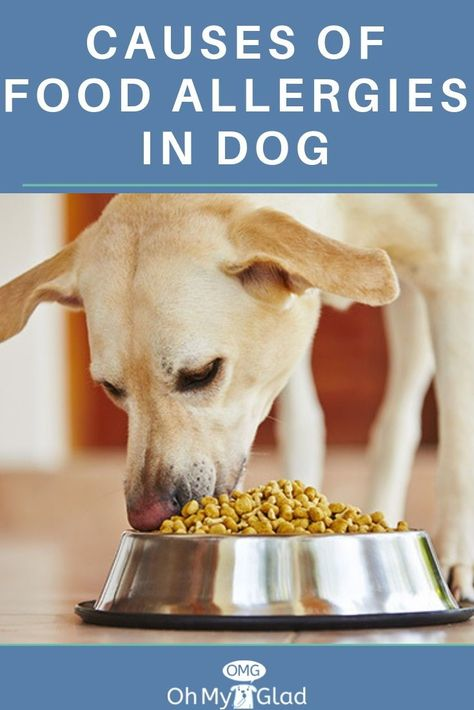 What Dog Owners Ought To Know About Dog Food Allergy Diet Dog