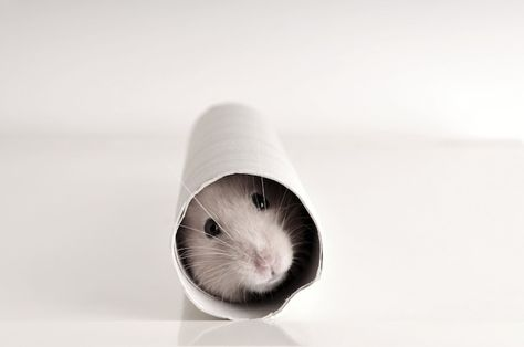 Is Content Marketing a Hamster Wheel You Can't Escape? - Copyblogger