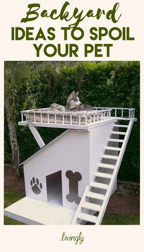 Spoil your fur babies with these pet-friendly backyard ideas.