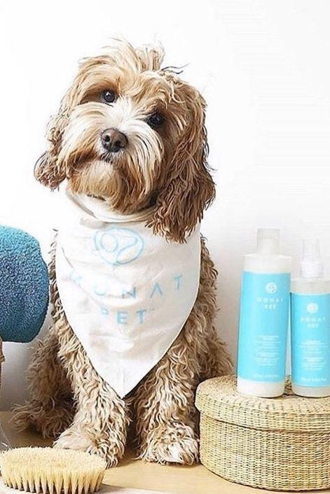 Happy Pawlidays Dog Wash Dog Pen Deodorant Spray