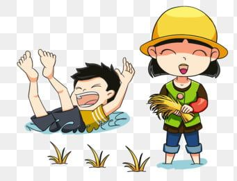 Paddy Rice Rice Hedao Png Transparent Clipart Image And Psd File For Free Download Clip Art Cute Little Boys Clipart Images