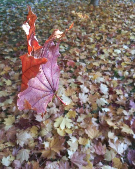foglie #autumn#instaautunno#foglie#in...