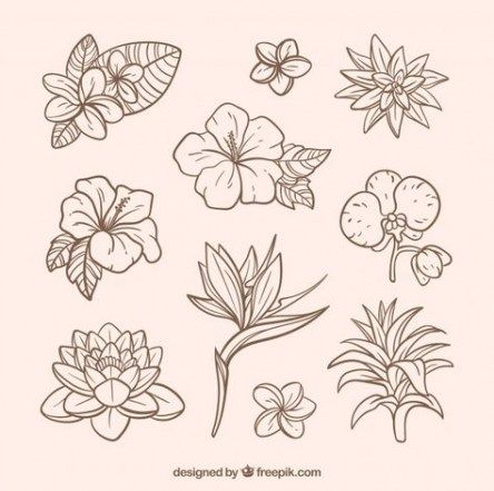 Flowers Vector Free Tropical 16 Ideas For 2019 Flowers