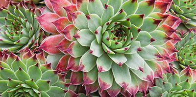 10 Fleurs Qui Poussent Presque Sans Eau Parterres De Fleurs