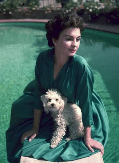 Jean Simmons & dog - love the colours in this image, the cute dog and of course the lovely Jean Simmons #englishrose