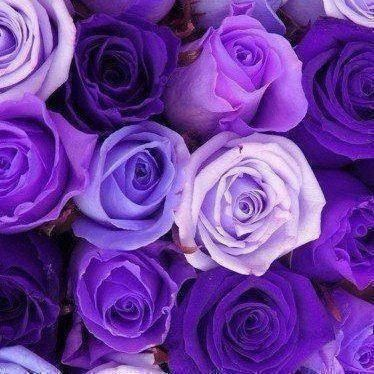 My favorite color is purple. I've changed my favorite color a million times in my life, but I always come back to purple. Purple just makes me happy, and honestly, it's just such a calming color, I wish everything was purple.