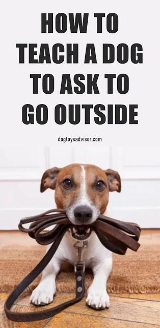 How To Teach A Dog To Ask To Go Outside Easiest Dogs To Train Dog Training Dog Training Techniques