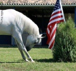 The Polohouse: We salute you...the brave men &  women in the armed forces