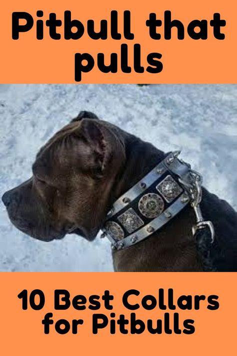 Pin On Best Dog Collars