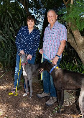 Greyhound Rescue Celebrates 10 Years With Fundraising Dinner July 6 Australian Dog Lover Greyhound Rescue Greyhound Rescue