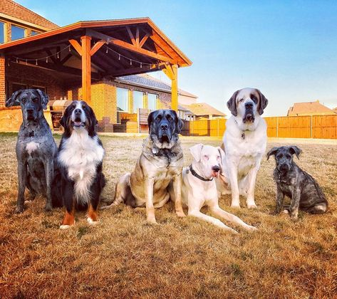 dogmomsofdallas The gang's all here...