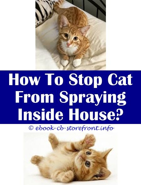 spray to stop cats peeing inside