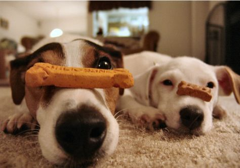 Soo tempting! My dogs could never manage this
