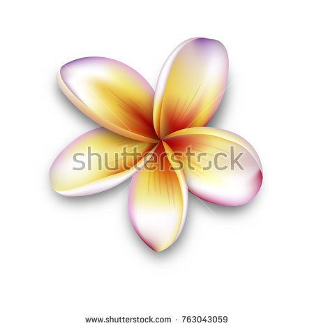 Plumeria Frangipani Flower 3d Vector Flower Illustration Frangipani Isolated On White In 2020 Vector Flowers Frangipani Flower Illustration