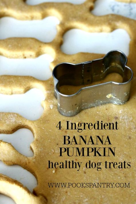 Pumpkin Dog Treats are a big hit and making this homemade version is super simple. Making homemade treats is easy, less expensive than store-bought and you can customize them to your dogs personal tastes. Easy, home banana pumpkin dog treats. Homemade Dog Cookies, Homemade Dog Food, Pumpkin Dog Treats Homemade, Homemade Dog Biscuits, Healthy Pumpkin, Pumpkin Dog Biscuits, Dog Biscuit Recipes, Dog Food Recipes, Dog Cookie Recipes